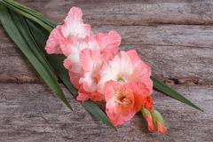 Soft pink gladiolus flower on old wooden Royalty Free Stock Images