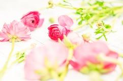 Soft pink Ranunculus flowers Royalty Free Stock Photo