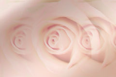 Soft pink rose background / design. This sweet rose design is computer generated. I used also filters to give it artistic effects. The colors and shapes are Stock Images