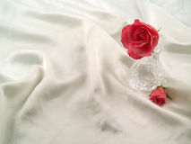 Soft Pink Roses Royalty Free Stock Photography
