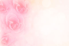 Soft pink roses flower vintage border valentine background Royalty Free Stock Images