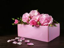 Soft pink roses over pink gift box Stock Photography