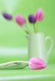 Soft Pink Tulip Royalty Free Stock Photography