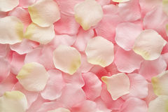 Soft pink and white rose petals. Floral background texture of delicate soft pink and white rose petals scattered randomly stock photos