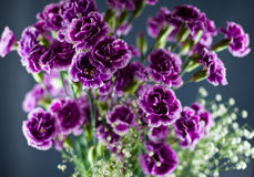 Soft Purple Boquet Arrangment. A light and refreshing boquet of spring flowers softly lit Stock Images