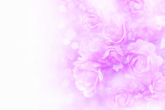 Soft purple roses flower frame vintage background. With copy space stock photography