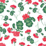 Soft red geranium seamless vector pattern Royalty Free Stock Photography