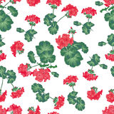 Soft red geranium seamless pattern Royalty Free Stock Image