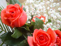 Soft red roses Royalty Free Stock Photography