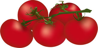 Soft red tomatoes Royalty Free Stock Photo