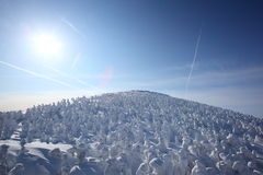 Soft rime, Mt.Zao in Japan Royalty Free Stock Images