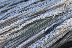 Soft rime reed Stock Images