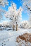 The soft rime and snow and blue sky landscape Royalty Free Stock Photos