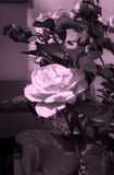 Soft sepia rose. Flower close up Royalty Free Stock Image