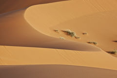 Soft shaped desert sand dune. Soft shaped sand dune in the sahara desert Royalty Free Stock Photography