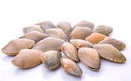 Soft Shell Clams X Royalty Free Stock Photography