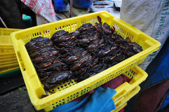 Soft shell crab farm Royalty Free Stock Photo