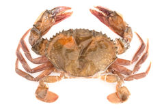 Soft shell crab Royalty Free Stock Photos