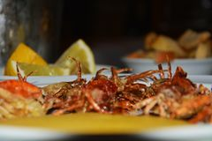 Soft shell crabs and blurred background Stock Images