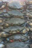 Soft shell crabs for sale stock image