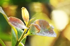 The soft shoots of the leaves royalty free stock images