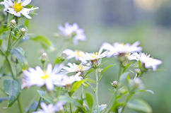Soft small flowers. A few soft flowers in a meadow soaking up the sun royalty free stock photo