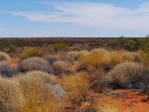 Soft Spinifex (triodia pungens) in Australia Royalty Free Stock Photo