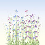 Soft spring flowers Royalty Free Stock Photography