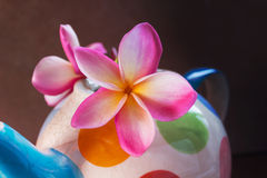 Soft still life beautiful pink yellow flower plumeria or frangipani in colourful vintage baked clay vase Royalty Free Stock Photography