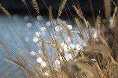 Soft summer grass background. Soft summer green grass background bokeh Royalty Free Stock Images