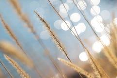 Soft summer grass background. Soft summer green grass background bokeh Stock Image