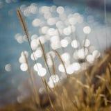 Soft summer grass background. Soft summer green grass background bokeh Royalty Free Stock Image