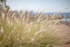 Soft summer grass background Royalty Free Stock Images