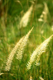 Soft Summer Grass Bokeh. Dreamy background. Royalty Free Stock Photography