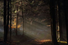Soft sunlight into dark forest landscape Stock Photos