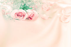 Soft sweet  rose flowers for love romance background Royalty Free Stock Images