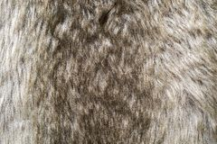 Soft texture of shaggy and fluffy fur Royalty Free Stock Photography