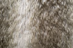 Soft texture of shaggy and fluffy fur Royalty Free Stock Images