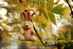 Soft toy on the autumn tree Stock Photo