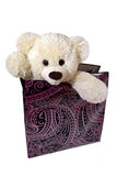 Soft toy bear in a gift box stock photography