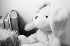 A soft toy bunny with floppy ears seen from the side, sitting among standing books. Side view of a plush toy sitting among standing books. Black and white photo royalty free stock photo