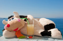Soft Toy - Cow Lying In The Sun With Juice Royalty Free Stock Image