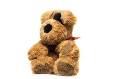 Soft toy cute brown dog on a white background. Isolate Stock Photos