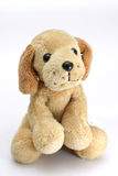 Soft-toy dog. Soft plush toy dog looking cute straight into the camera royalty free stock image