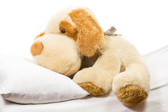 Soft toy dog. Fluffy soft toy dog lying on the bed with a pillow on a white background stock photo
