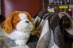 Soft toy dog lying in an vintage chair. On a checkered plaid blanket on the background of bookshelves home library royalty free stock photos