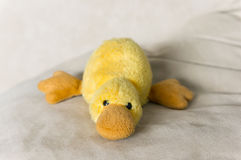 Soft toy duck Stock Photography