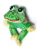 Soft-toy Frog Stock Photos