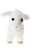 Soft Toy Lamb Stock Image