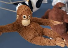 Soft toy orange monkey in the toy store stock photo